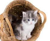 Two fluffy kitten in a round basket isolated on white background — Stock Photo