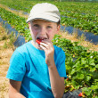 Stock Photo: Child eats strawberry on field with beds