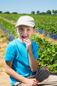 The child eats a strawberry on the field with the beds — Stock Photo