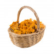 Full basket of mushrooms chanterelle — Stock Photo
