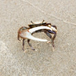 Male fiddler crabs protected huge claws — Stock Photo #28536667