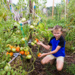 Boy is proud grown tomatoes — Stockfoto #29606003