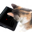 Stock Photo: The cat is playing a game on the tablet