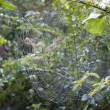 Web in drops of dew — Stock Photo