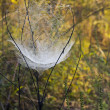Web in the field with dew drops — Stock Photo