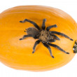 Stock Photo: Missouri tarantulon pumpkin