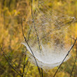 Web on blades of grass in drops of dew — Stock Photo