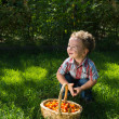 A smiling little boy with a basket of tomatoes — Stock Photo