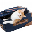 Cat peeking out of suitcase — Stock Photo #37713173