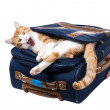 Cat yawns lying in the pocket of a blue suitcase — Stock Photo
