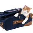 Sad kitten is sitting in a suitcase — Stock Photo
