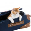 Stock Photo: Cat sits in suitcase important