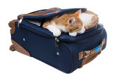 Red cat sleeping bag lying in the pocket — Foto Stock