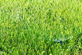 Garden water sprinkler — Stock Photo