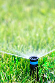 Water sprinkler — Foto Stock
