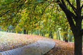 Fall in park — Stock Photo