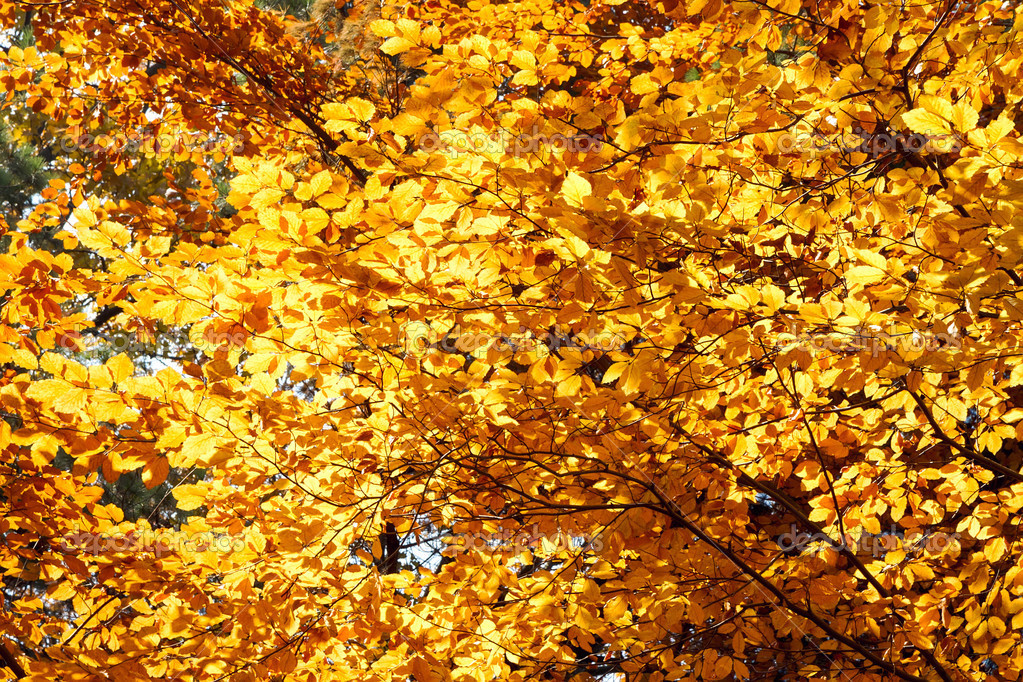 Autumnal yellow colors in a forest — Stock Photo #13615398