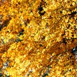 Autumn yellow leaves — Stock Photo
