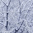 Branches covered with snow — ストック写真