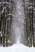 Forest road in winter — Stock Photo