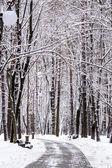 Snowy winter park — Stock Photo