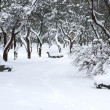 Snowy winter garden — Stock Photo