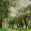 Fruit trees in a spring orchard — Stockfoto