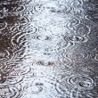 Rain puddle — Stock Photo #28242619