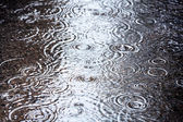 Rain puddle — Stock Photo
