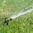 Sprinkler watering in garden — Stock Photo
