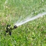 Sprinkler watering in garden — Stock Photo