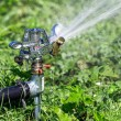 Water sprinkler — Stock Photo #29586449