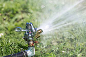 Garden lawn water sprinkler — Stock Photo