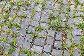 Trilha com grama — Foto Stock