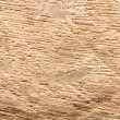 Closeup wooden cut texture — Stock Photo