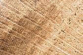 Texture legno anelli — Foto Stock