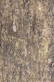 Corteza de árbol — Foto de Stock