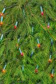 Christmas lights on a spruce — Stock Photo