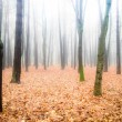 Misty woods — Stock Photo