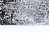 Winter trees on snow — Stock Photo