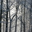 Frozen winter trees — Stock Photo