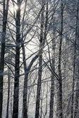 凍結する冬の木 — ストック写真