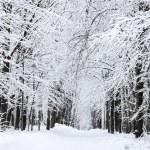 kar patika — Stok fotoğraf