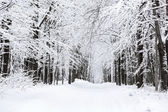 Path in a winter forest — Stock Photo