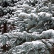 Fir branch on snow — Stockfoto