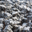Winter trees background — Stock Photo