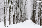 Winter path in park — Stock Photo