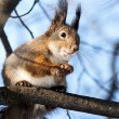 Stock Photo: Squirrel on tree branch