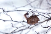 Frost covered leaf — Stockfoto