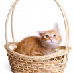 Frightened little kitten in straw basket. — Stock Photo